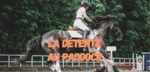 Read more about the article La Détente au Paddock
