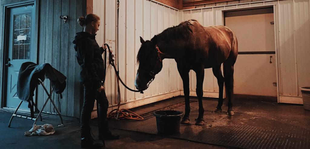 comment attacher un cheval