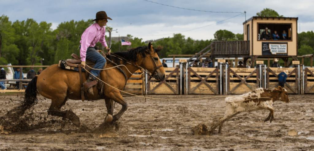 calf roping, équitation western épreuve de lasso
