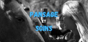 Read more about the article Pansage et soins aux chevaux