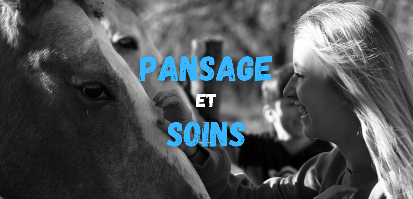 You are currently viewing Pansage et soins aux chevaux