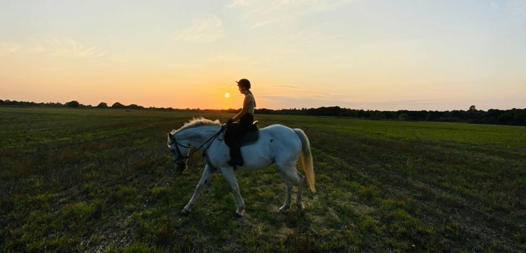 travail à la longe, travail à cheval