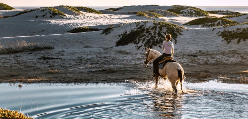 cavalier western dans la nature